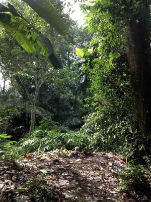 Beautiful rainforest with plastic packaging as ground cover.